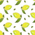 Yellow lemon fruits with green leaves isolated on white background.Watercolor drawing seamless pattern for design .