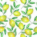 Yellow lemons on the branches