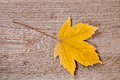Yellow maple leaf Stock Photo