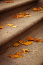 Yellow maple leaves on the stairs Royalty Free Stock Photo