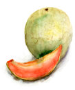 Yellow melon original watercolor illustration Stock Photos