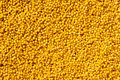 Yellow millet Royalty Free Stock Images