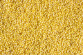 Yellow millet close up Stock Images