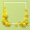 Yellow mimosa on transparent background. Template frame for greeting card on March 8 International Womens Day