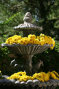 Yellow Mums in Garden Fountain Royalty Free Stock Photo