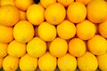Yellow muskmelon the background of Stock Image