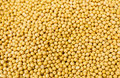 Yellow mustard seed group of the Stock Photos