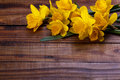 Yellow narcissus or daffodil Royalty Free Stock Photo