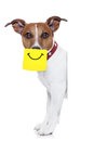 Yellow not dog with a note sticking on nose with a big smile on it Royalty Free Stock Image