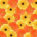 Yellow and orange daisy background Royalty Free Stock Images