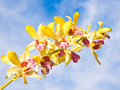Yellow orchid beautiful flower with a sky background Stock Photos