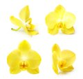 Yellow orchid flower isolated Royalty Free Stock Photo