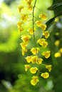 Yellow orchids on green background Royalty Free Stock Photo