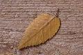 Yellow outumn leaf Royalty Free Stock Photo