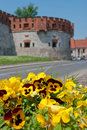 Yellow pansies and the Wawel castle walls. Royalty Free Stock Images