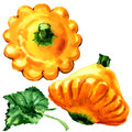 Yellow pattypan, baby summer squash with leaf isolated, watercolor illustration on white Royalty Free Stock Photo