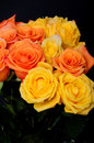 Yellow and peach roses rose bouquet isolated over black Stock Images