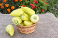 Yellow pepper in a  basket on a table in a garden Royalty Free Stock Photo