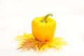 Yellow pepper isolated Royalty Free Stock Image