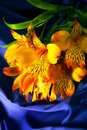 Yellow Peruvian lily on a blue silk Royalty Free Stock Photos