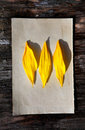 Yellow petals on old paper wooden wall background Stock Images