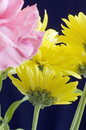 Yellow and pink flowers Stock Photography