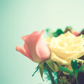 Yellow and pink roses pale Royalty Free Stock Image