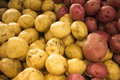 Yellow potatoes at the market Royalty Free Stock Photos