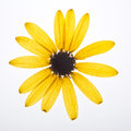 Yellow pressed flower Royalty Free Stock Photo