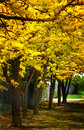 Yellow pretty bright tree leaves over sunlit ground Stock Photos