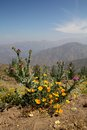 Yellow purple flowers beautiful view ande mountains chili Stock Photo