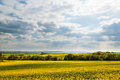 Yellow Rape Field against Blue Sky with Clouds Royalty Free Stock Photo