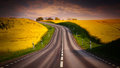 Yellow rapeseed field and a emty road at sunset Royalty Free Stock Images