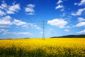 Yellow rapeseed field under amazing sky Royalty Free Stock Images