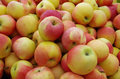 Yellow red apples Royalty Free Stock Photo