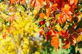 Yellow and red leaves in autumn