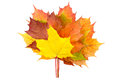 Yellow, Red and Orange Fallen Autumn Leaves Royalty Free Stock Photography