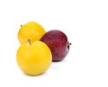 Yellow,Red Ripe plum on white background. Royalty Free Stock Photo