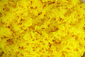 Yellow rice Stock Image