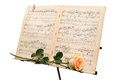 Yellow rose and an ancient music score isolated on white background stand Stock Image