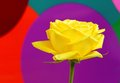 Yellow rose on colorful background Royalty Free Stock Photo