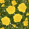 Yellow Rose and Green Leaves on White Background. Vector Illustration Royalty Free Stock Photo
