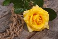 Yellow rose on an old rough wooden table Royalty Free Stock Photo