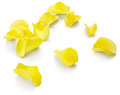 Yellow rose petals Royalty Free Stock Photo