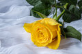 Yellow rose with water drops- fabric background Royalty Free Stock Photo