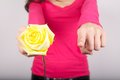 Yellow rose for you Royalty Free Stock Image