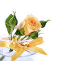 Yellow roses in a glass flowers bouquet of Royalty Free Stock Images