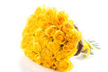 Yellow roses isolated on white background beautiful bouquet of Stock Image