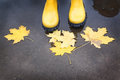 Yellow rubber boots in a puddle of autumn feet standing where leaves float Stock Images