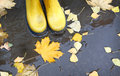 Yellow rubber boots in a puddle of leaf fall feet standing where leaves float Stock Photo